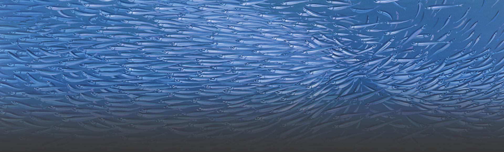 schwarmfische